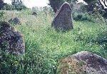 Белица, кладбище еврейское