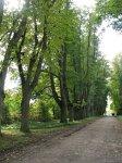 Грушевка (Ляхов. р-н), усадьба: парк, XIX в.