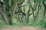 Каменполье, усадьба: парк, кон. XIX в.