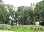 Урожайная (Ляхов. р-н), усадьба: парк, XVIII-XIX вв.